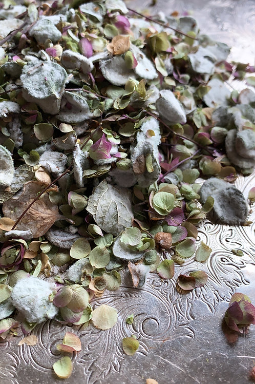 """Dittany of Crete - Rare Occult Herb-   """"Sorcerous Love Magic"""" Manifestation"""