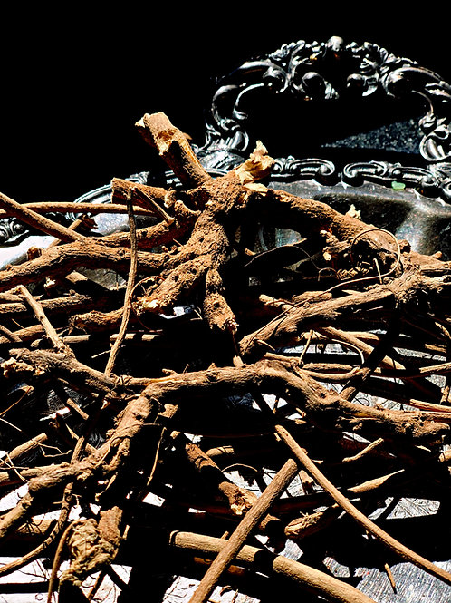 Devil's Shoestring Roots- Hand-Harvested- Trip up the Devil, Protection, Clear