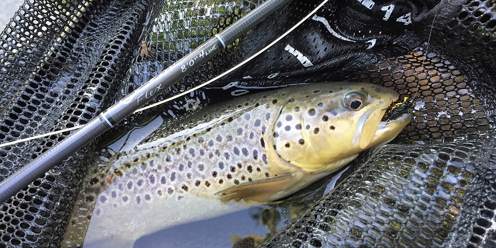 Tying and Fishing Terrestrials