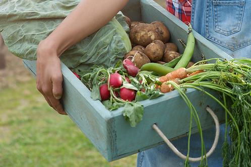 Abonnement panier de légumes familial