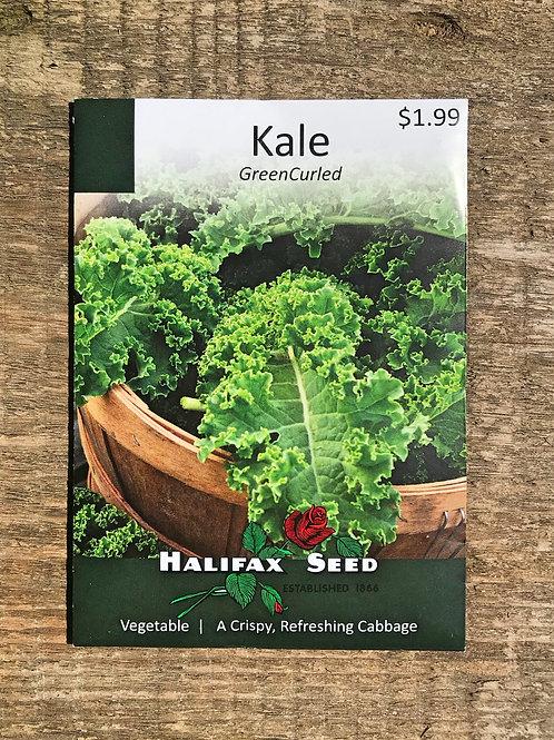Semences choux frisé (Kale)