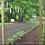 Thumbnail: Crochet pour plant de tomates avec ficelle (à l'unité)
