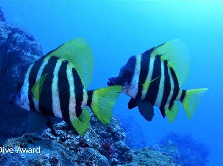 DiveAward八丈島ツアー 2020年7月31日~8月3日