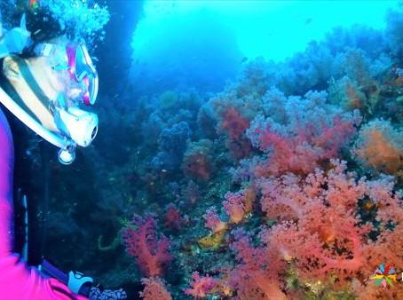 DiveAward伊東・初島ツアー 2020年10月24日~25日