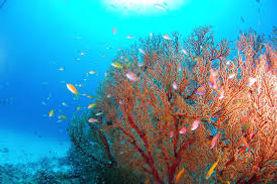 水中画像2.jpg