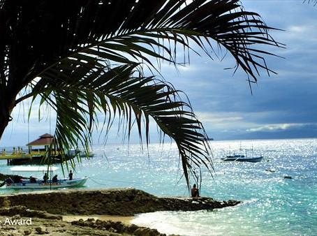 DiveAward フィリピン モアルボアルツアー  1月10日~13日