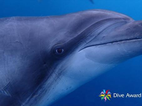 DiveAward利島ツアー 2020年9月25日~27日