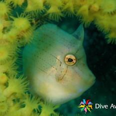 DiveAward城ヶ島ツアー 2021年5月23日