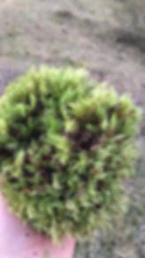 WhatsApp Image 2018-06-02 at 17.34.57.jp