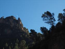 Vulchers flying over moon - Spain