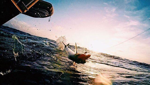 Reeling in a MaiMai 🎣#earlymorningcatch