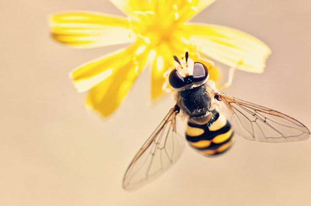 bees-and-wasps-may-cause-a-severe-allergic-reaction