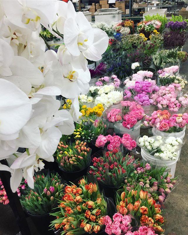 _Daisy, what makes you feel abundant__ 💐 _Flowers. Fresh flowers