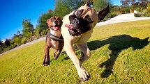 loopy dogs.jpg