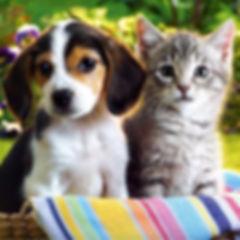 Pet & Puppy Visits