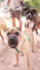 Dog Walker_edited_edited.jpg