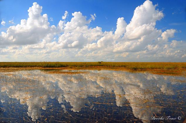 Everglades Sea of Grass