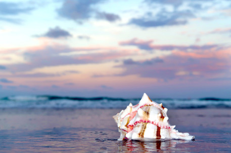 Seaside Treasured Murex