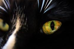 CC Eyes