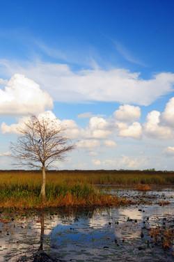 EvergladeDec2012 295edit