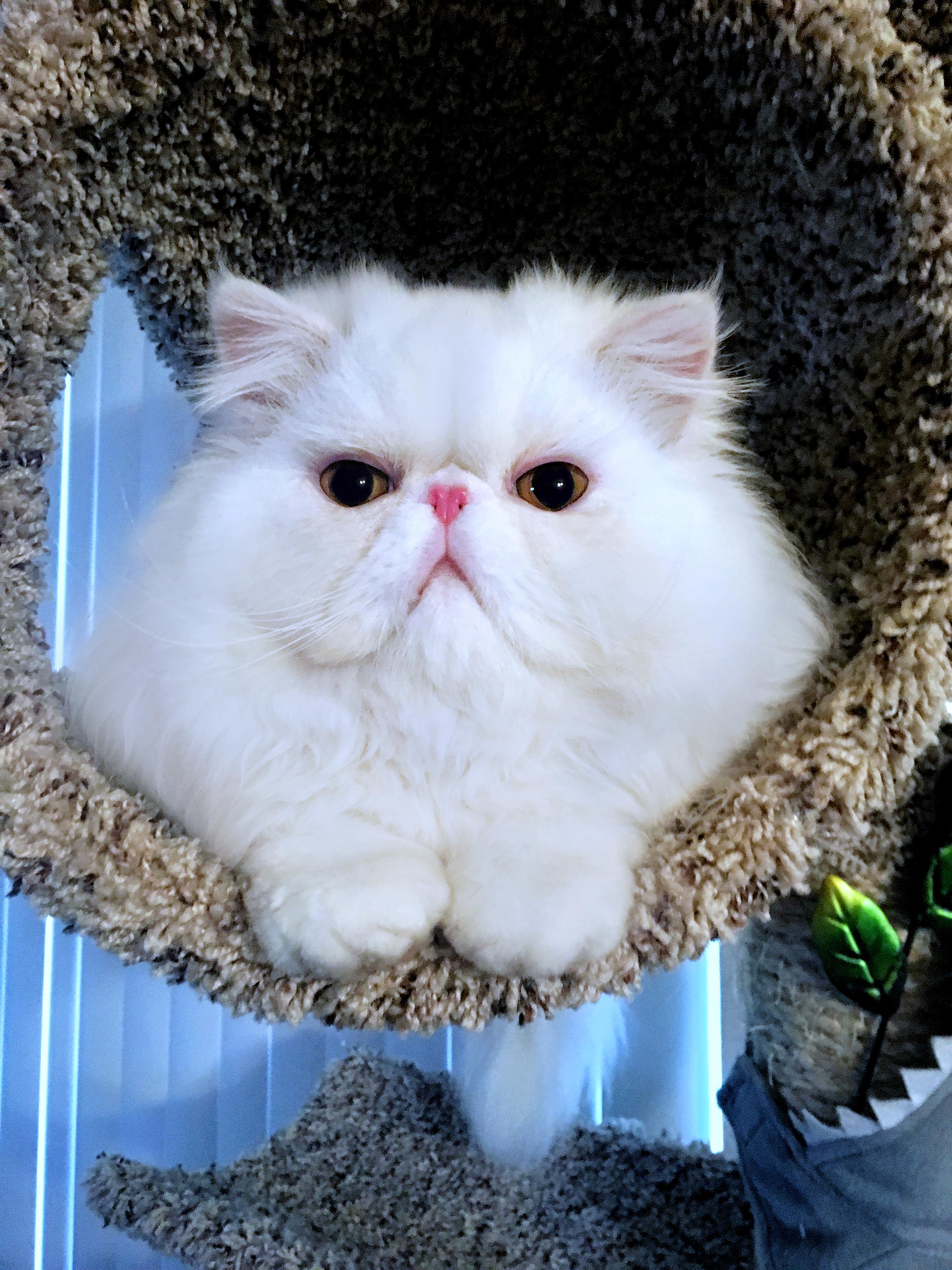 LL Cool Cat