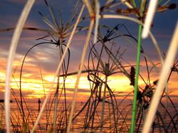 Sunrise Sea Grass