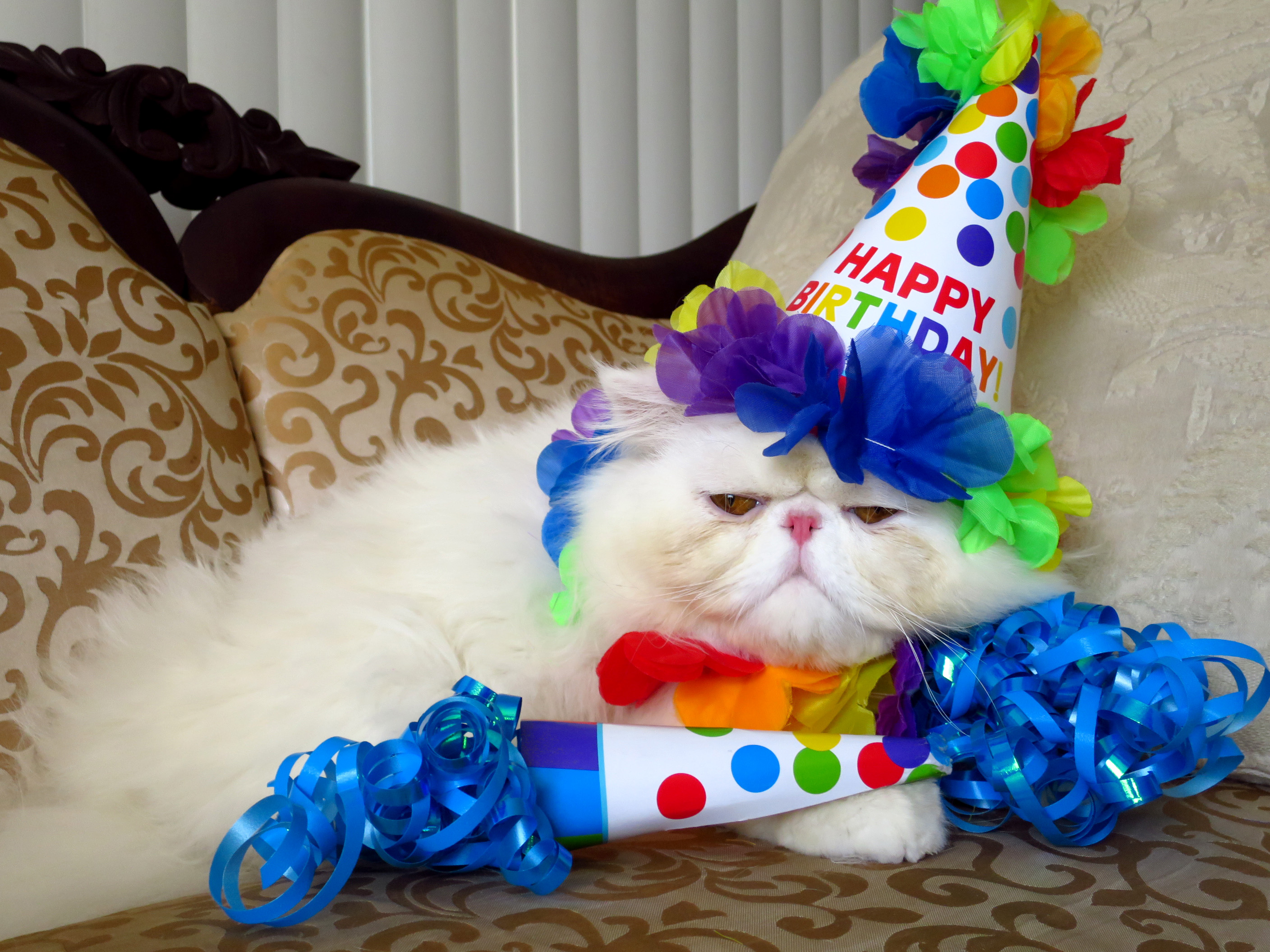 Birthday Kitty