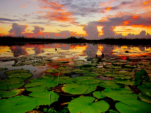 Saturated Everglades Sunset