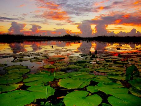 Saturated Everglades Sunset