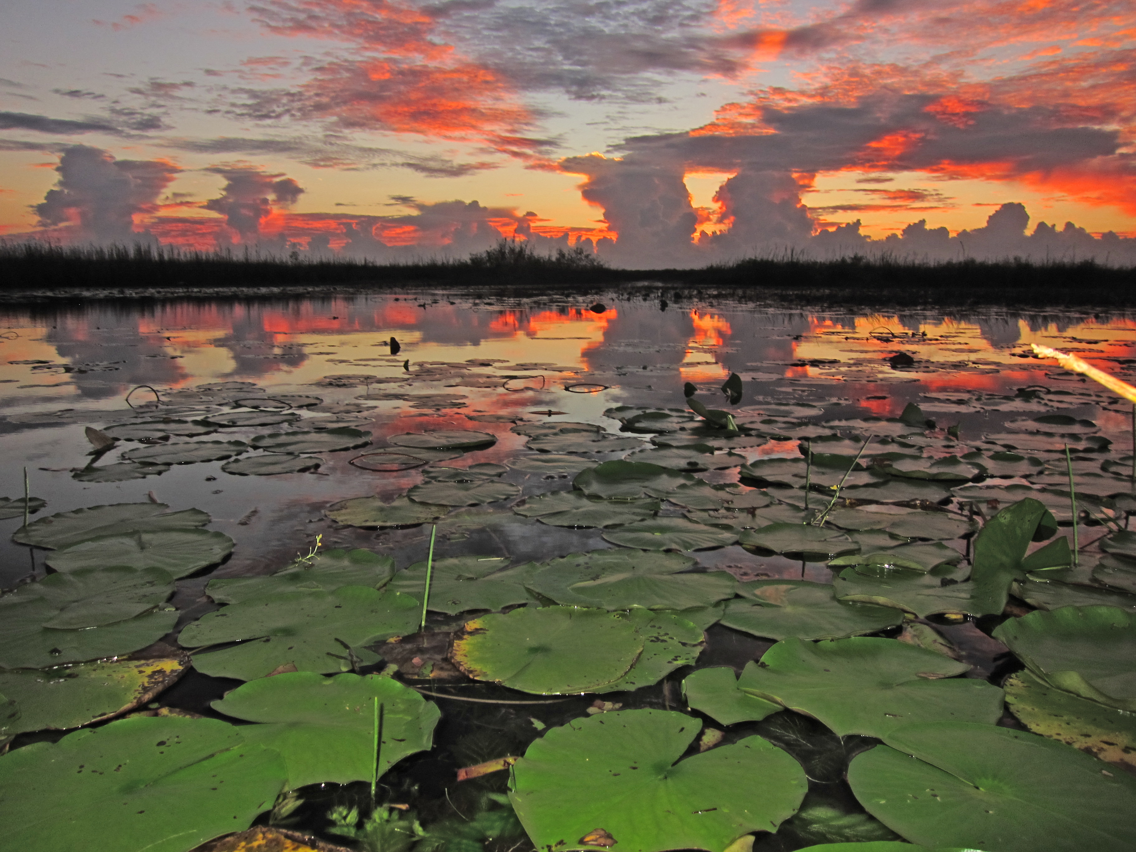 Everglades Radiant Sunset