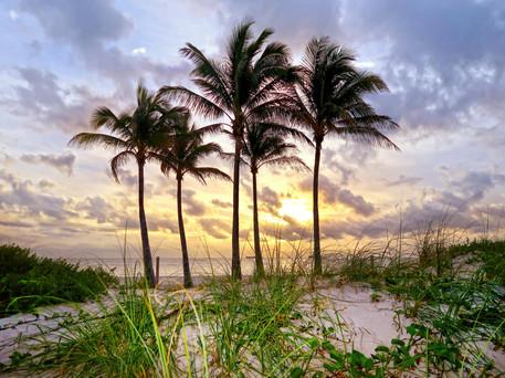 5 Palms Sunrise