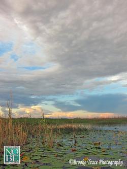 Everglades Serenity