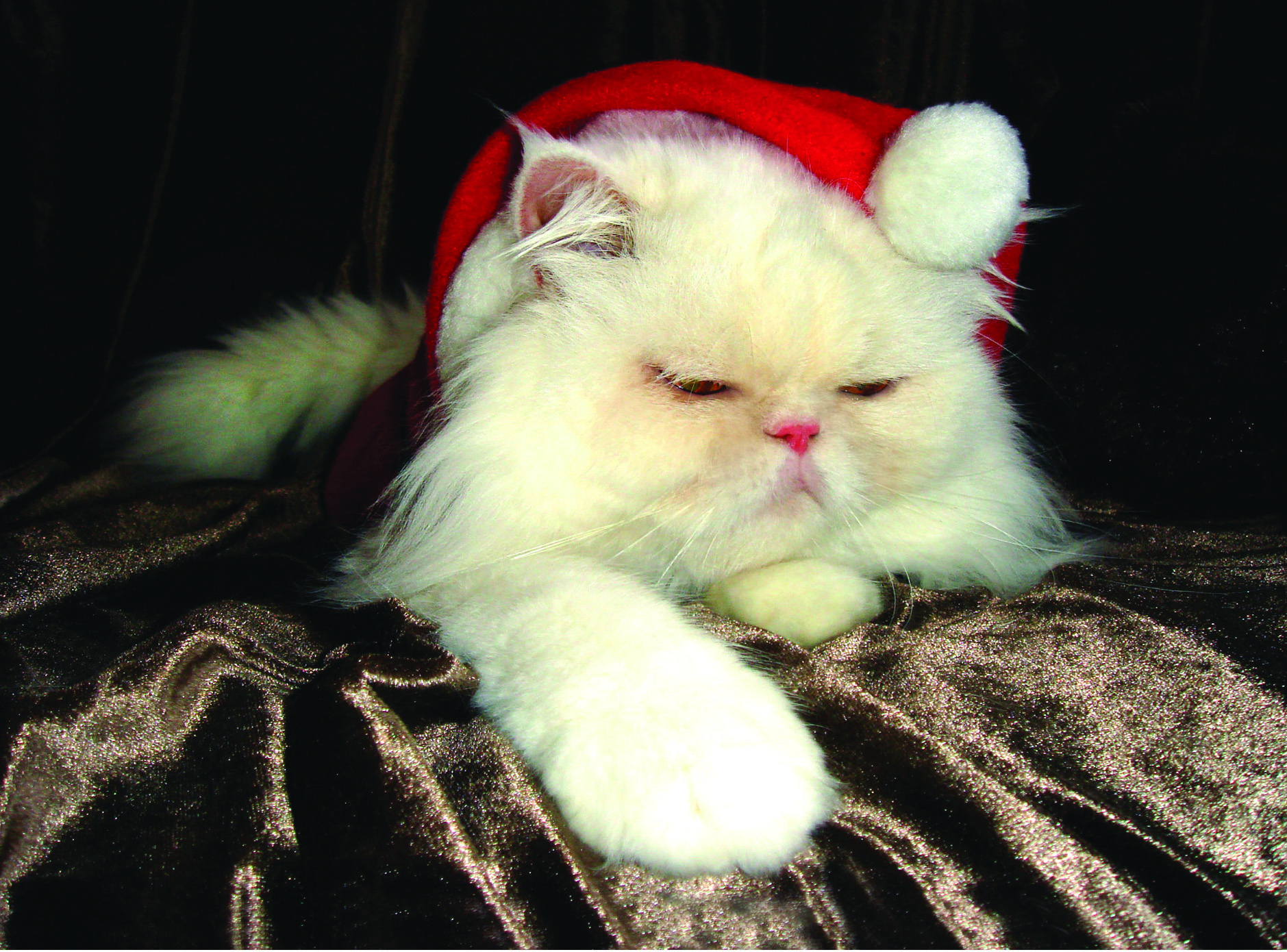 Kitty Clause