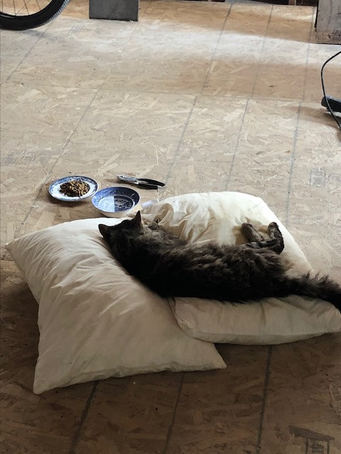 A sick cat lays on a pillow with food and water nearby.