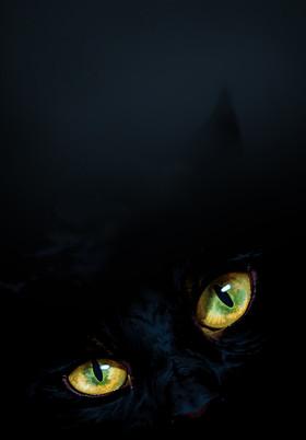 Cats_