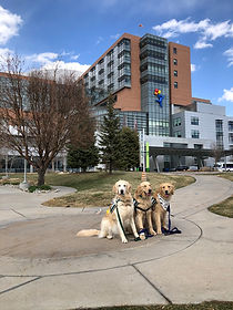 Dogs in front of hospital.jpeg