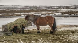 fotocreatividad_Islandia 23.jpg