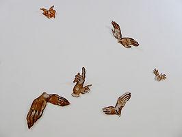 mains-oiseaux_wix.jpg
