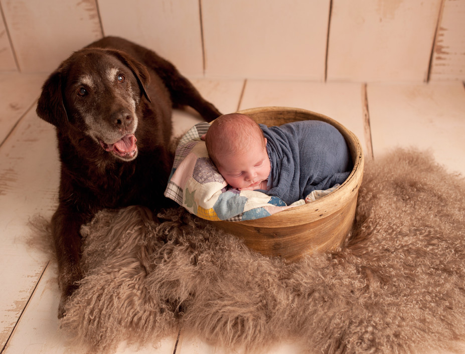 Newborn and dog family pet