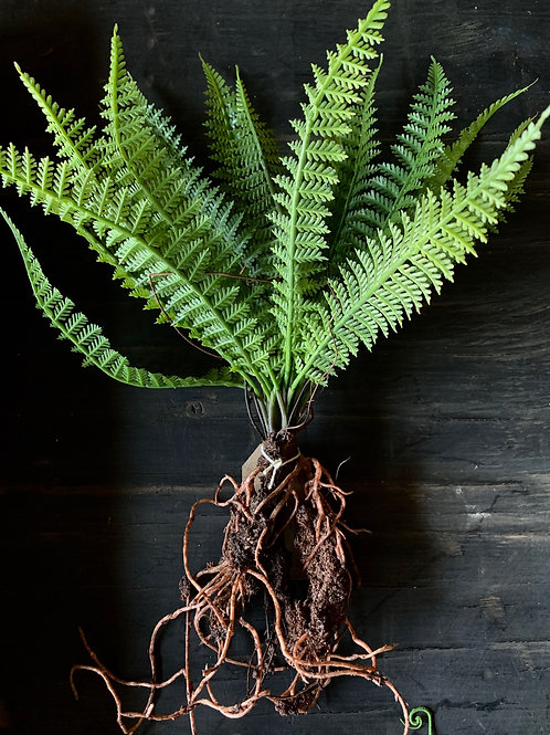 faux feather fern with roots