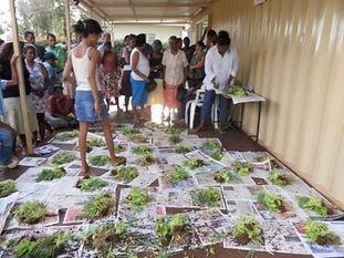 MAA food security
