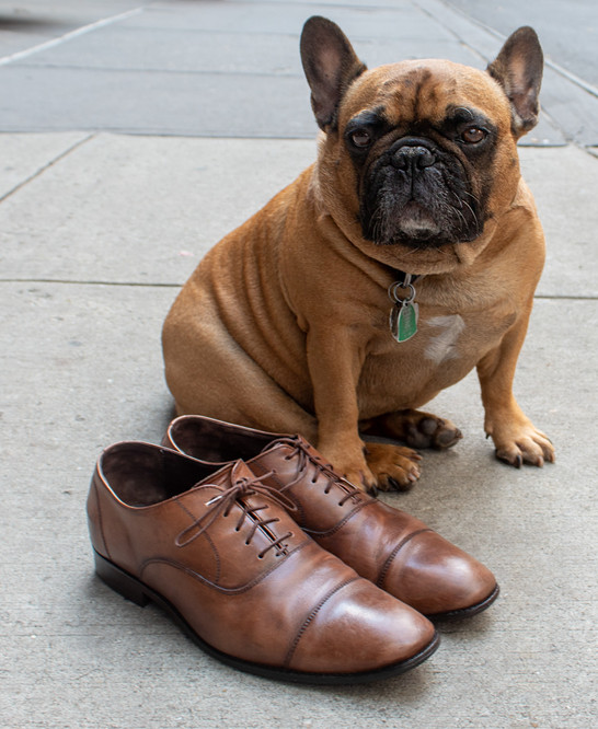 Bruno with Men's Dress Shoes