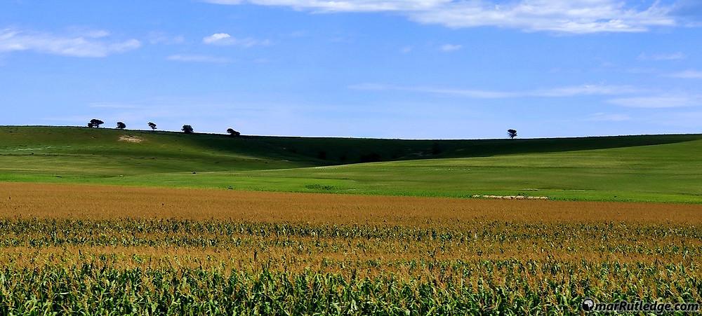 Corn Field in Kansas