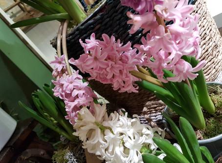 La Hyacinthe, une fleur au parfum envoûtant :