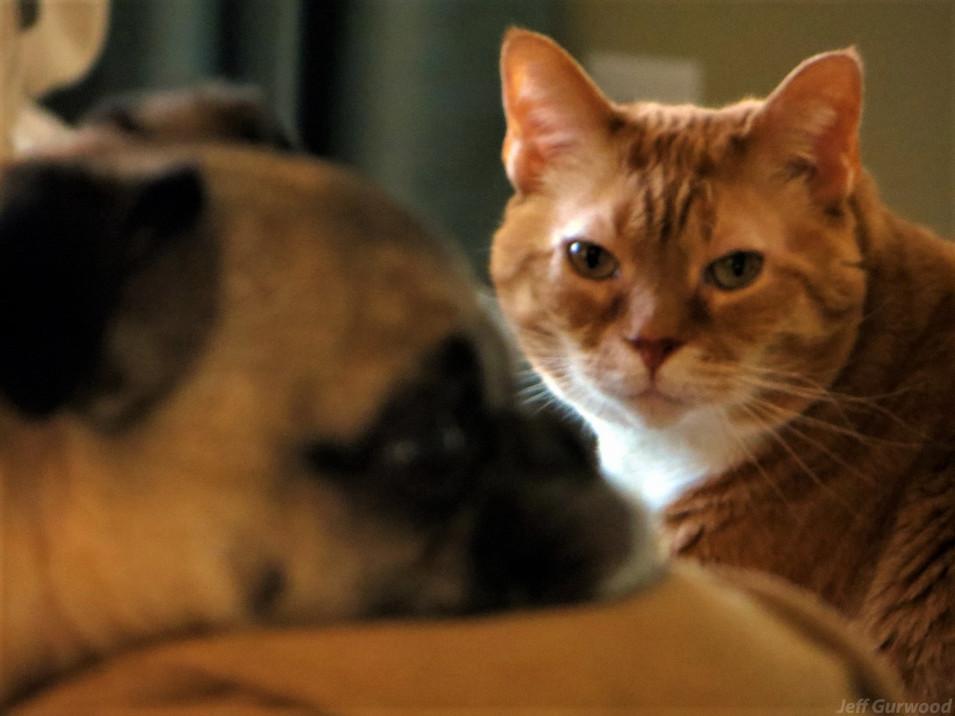 Dog Cat 2013