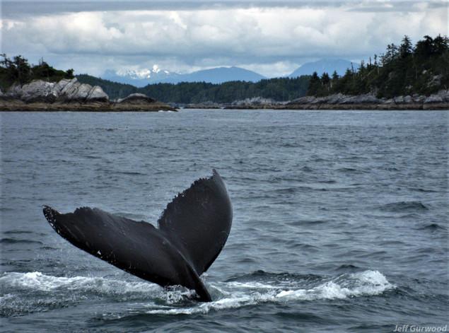 Alaska (11) 2008
