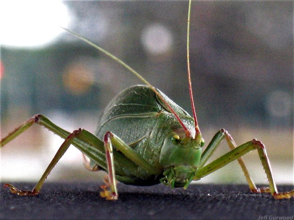 Giant Bug Friend 2006 2