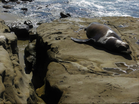San Diego Sea Lions 2014 2