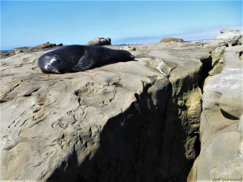 San Diego Sea Lions 2014 3