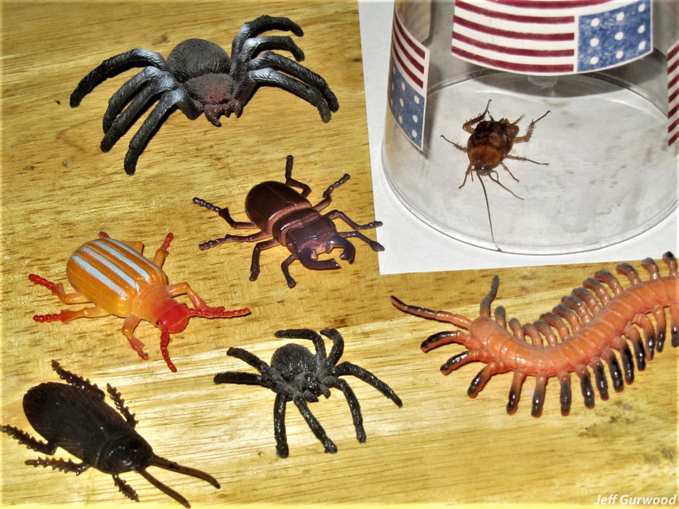 6 Fake Bugs 1 Real Bug 2011